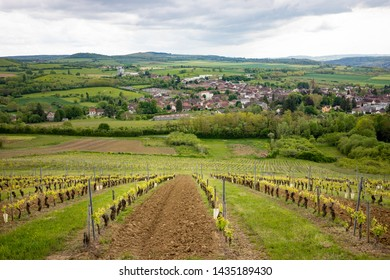 Vineyards in Beaune early spring, bicycle trip through beautiful yards bringing  grape harvest for French vines