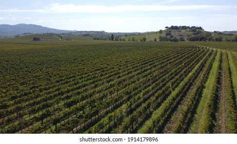 vineyards in beautiful tuscany, italian wine from grapes in sunny location