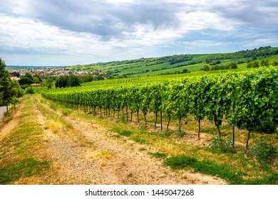 Vineyards between Laubenheim, Nackenheim, Nierstein and Oppenheim, Germany