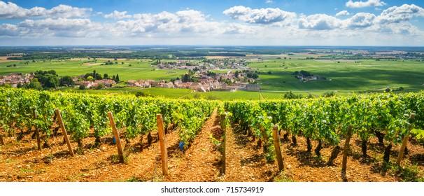 Weinberge in Burgund, Frankreich