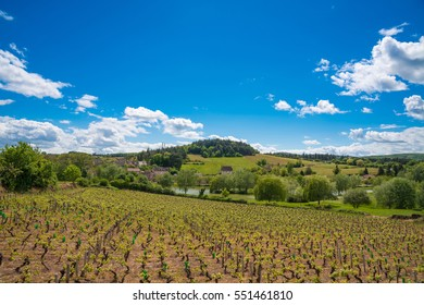 Vineyards in Burgundy - Route de vins, France