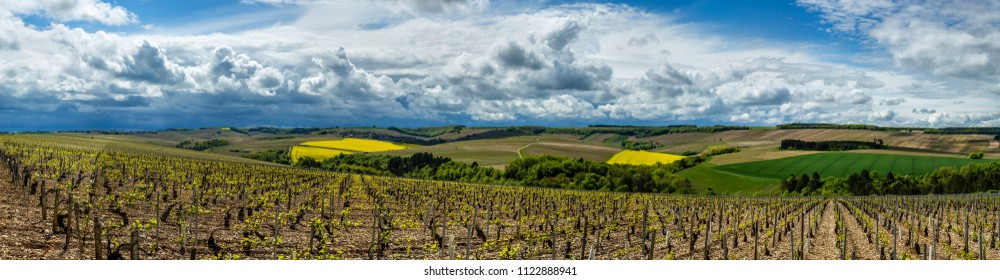 Vineyards in the Chablis region of Burgundy, France