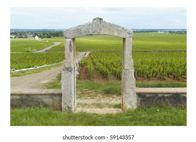 Vineyards of Chassagne Montrachet, Bourgogne
