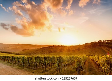 Vineyards in chianti