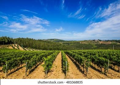Vineyards in Chianti