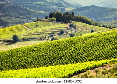 Vineyards in Chianti region of Tuscany in Italy