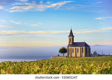 Vineyards and church in Beaujolais with a large blue sky at sunrise, France