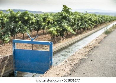 Vineyards and close up irrigation canal.