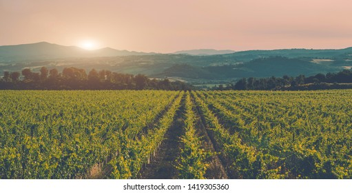 Vineyards and countryside landscape, Tuscany, Italy Europe. Large vineyard plantation under beautiful sunset light. Wine production region. Vintage tone filter effect with noise and grain