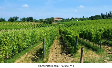 Vineyards in the countryside outside Siena, Italy
