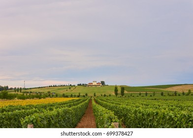 Vineyards in Croatia.