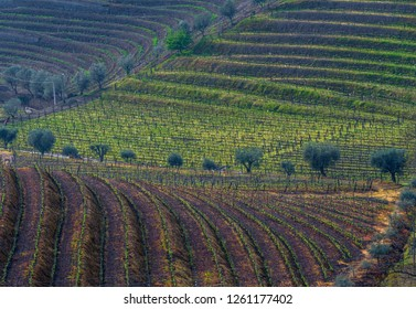Vineyards in Douro river valley. Portugal