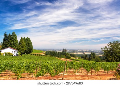 Vineyards in the Dundee Hills in Oregon with a beautiful dramatic sky