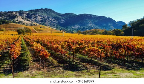 Vineyards in the Fall, Napa Valley