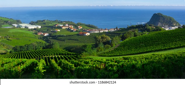 Vineyards and farms for the production of white wine with the sea in the background.