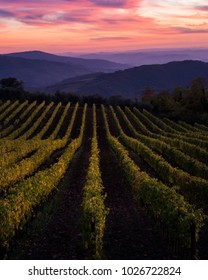 Vineyards and fields leading to mountains, amazing sunset sky with colorful clouds
