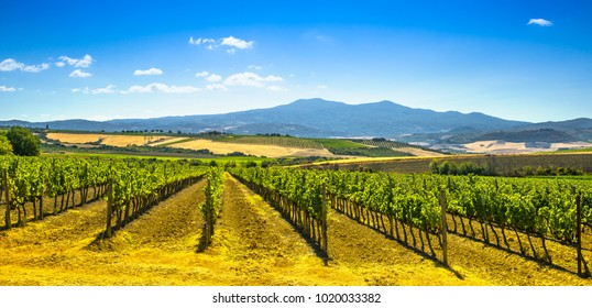 Vineyards, fields and Monte Amiata mountain. Tuscany, Italy, Europe.