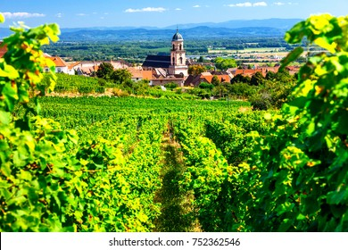 Vineyards of France. Famous Alsace region with pictorial traditional villages