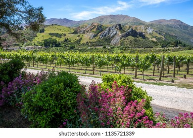 Vineyards in front of a mountain range and next to a driveway at a winery near Queenstown, New Zealand