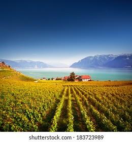 Vineyards at Geneva Lake, Lavaux area