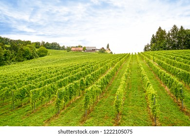 Vineyards with grape vines and winery before harvest in autumn
