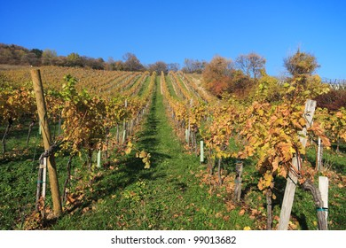 The vineyards of Gumpoldskirchen, Lower Austria in autumn Gumpoldskirchen is famous for its wines and attracts several visitors to its hillside vineyards.
