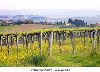 vineyards in the hills of Tuscany in spring and typical Tuscan landscape in the background, Italy