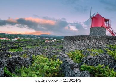 Vineyards inside lava walls at Criacao Velha. Pico island, Azores, Portugal