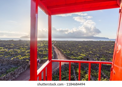 Vineyards inside lava walls at Criacao Velha during sunset. Pico, Azores islands, Portugal