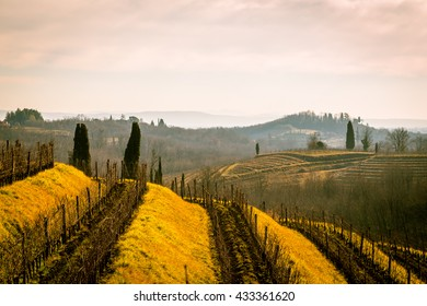 vineyards of italy in early spring in a sunny morning