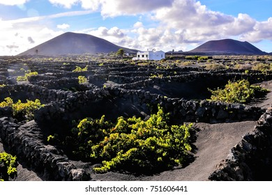 Vineyards in La Geria Lanzarote canary islands Spain