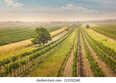 Vineyards landscape in Burgenland, Austria