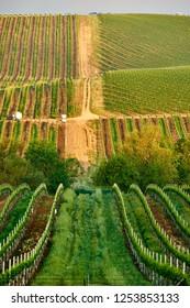 Vineyards landscape in California, USA