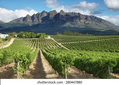 Vineyards landscape near Wellington, South Africa
