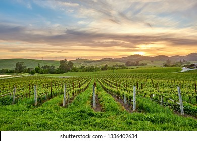 Vineyards landscape at sunset in California, USA