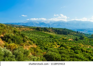 Vineyards landscape at the valleys of Heraklion, in Crete island, Greece.