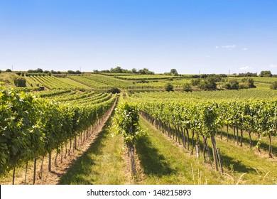 Vineyards landscape in Wachau, Austria