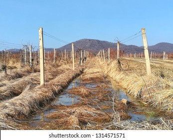 Vineyards landskape of Serbia in the winter during the day with a puddle and Vrsac mountain