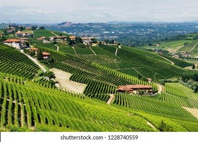 Vineyards in the Langhe near Barbaresco and Alba, Cuneo, Piedmont, Italy, at summer
