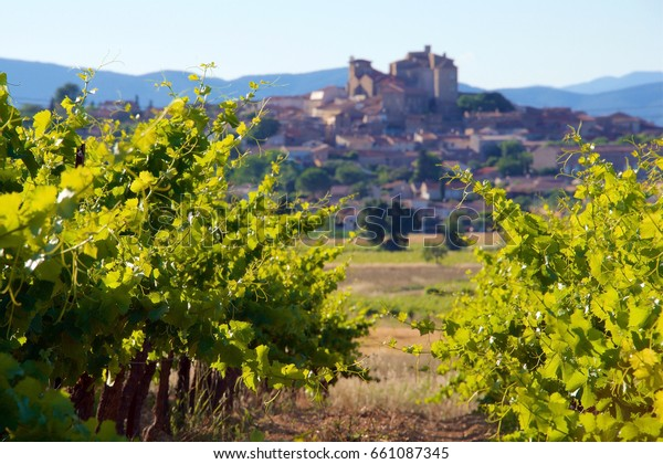 Vineyards of the Languedoc region of the South of France in early evening in summer, near the village of Puissalicon in the Herault Department