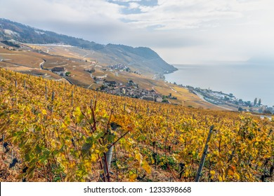 Vineyards in the Lavaux at the Lake Geneva