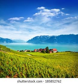 Vineyards in Lavaux village, Switzerland