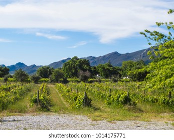 vineyards located between the mountains South Africa