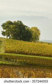 Vineyards of Margaux