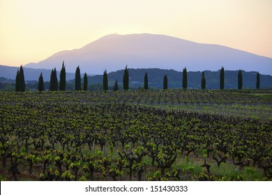 vineyards and Mont Ventoux at dawn, Provence