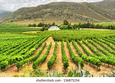 Vineyards of Montagu. Shot in Western Cape, South Africa.