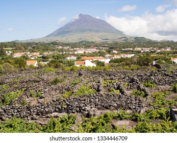 Vineyards and Mount Pico, Pico Island, Azores