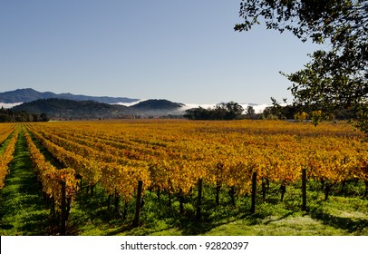 Vineyards in Napa Valley in fall