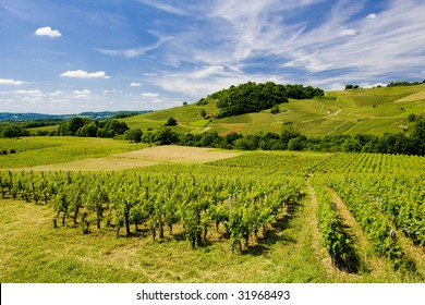 vineyards near Chateau Chalon, Departement Jura, Franche-Comte, France