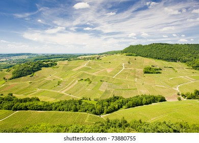 vineyards near Chateau Chalon, Department Jura, Franche-Comte, France